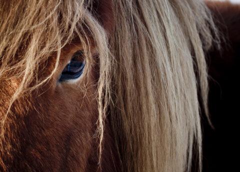 Hest fra nabogården