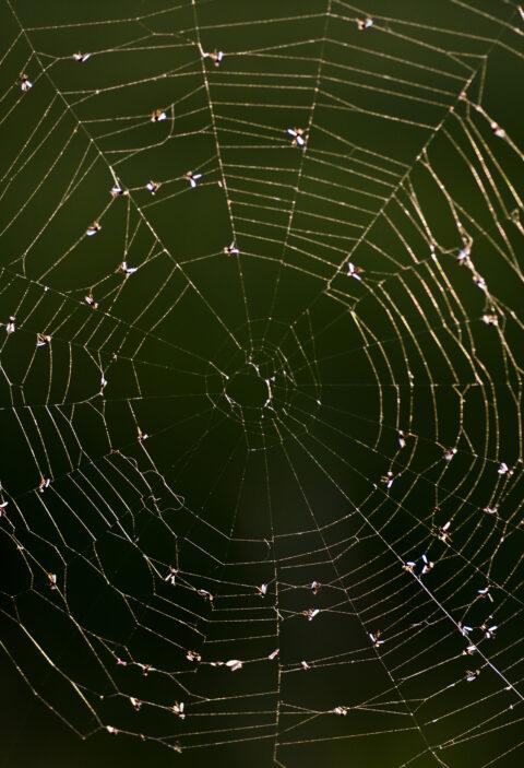 Edderkoppespind
