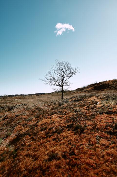 Naturbillede fra Randbøl hede